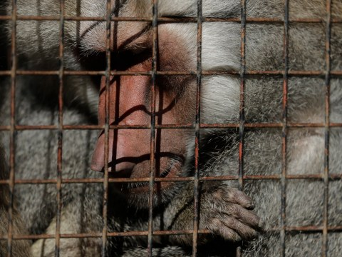 Hundreds of animals still left in limbo a year after zoo closes its doors