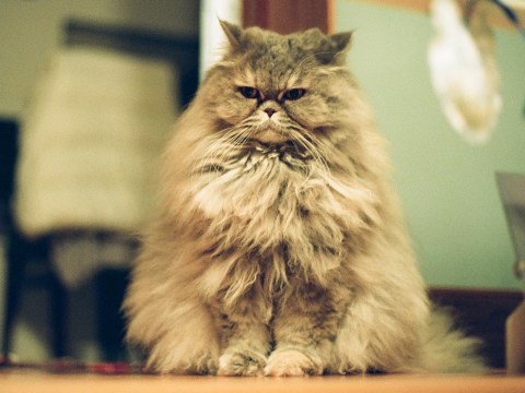 9 things you know if your pet has way too much hair