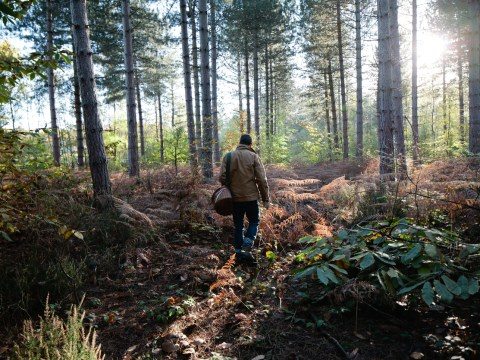 Secrets of the wild medicine foragers