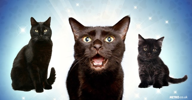 Why black cats are the best cats