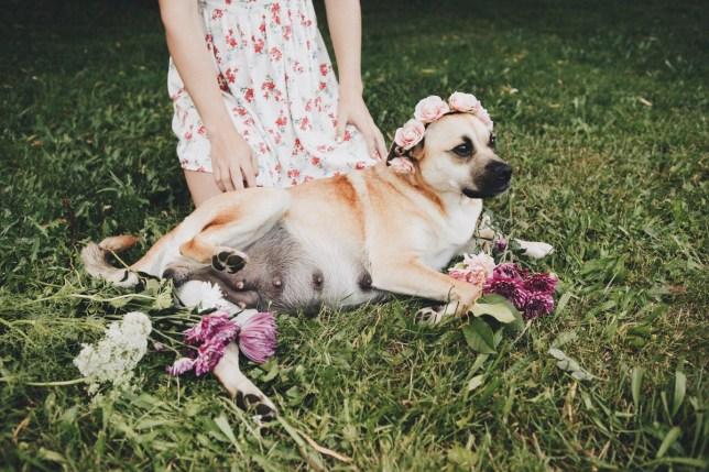 maternity doggo photoshoot