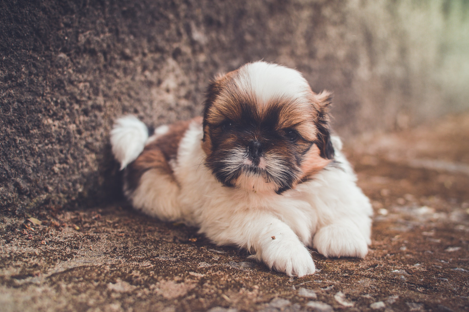 Looking at cute animals could give your relationship its mojo back