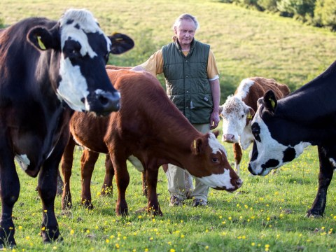 Farmer gives up herd of cattle to animal sanctuary after becoming vegetarian