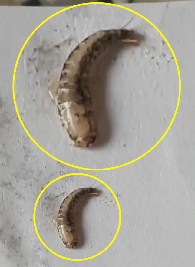 Two people living miles apart discover 'worm-like parasites' in tap