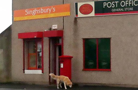 Shop changed name from Singhsbury's to Morrisinghs gets