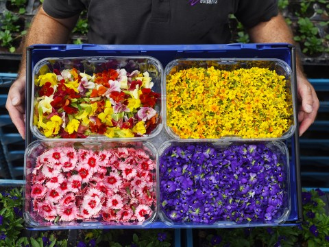 Edible flowers are now available to buy at Sainbury's