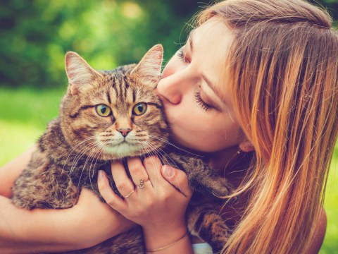 How I learned to love cats – even though they hate me