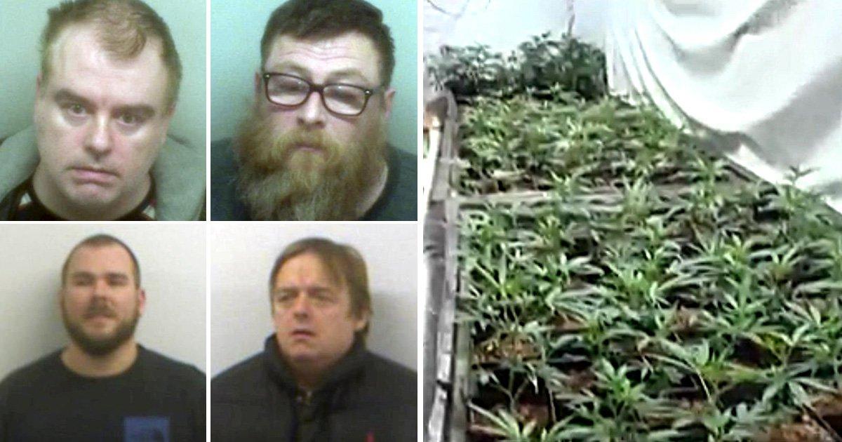 Group behind £50,000,000 cannabis farm jailed for 90 years