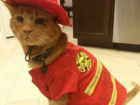Kitten rescued by firefighter lands job in the station