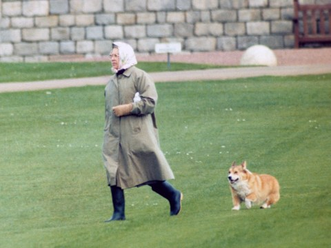 The Queen has adopted a new corgi called Whisper