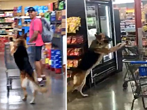 Dog spotted casually pushing trolley down shopping aisle