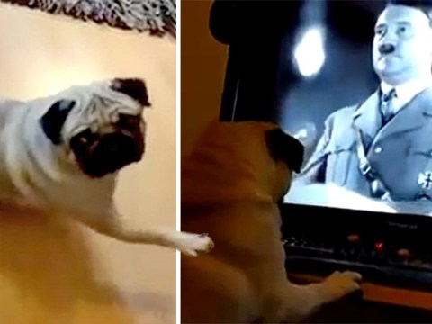 Man who filmed dog doing Nazi salute when he said 'gas the Jews' denies committing hate crime