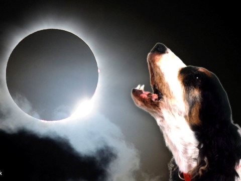 Your pets might start acting a little strange during the eclipse