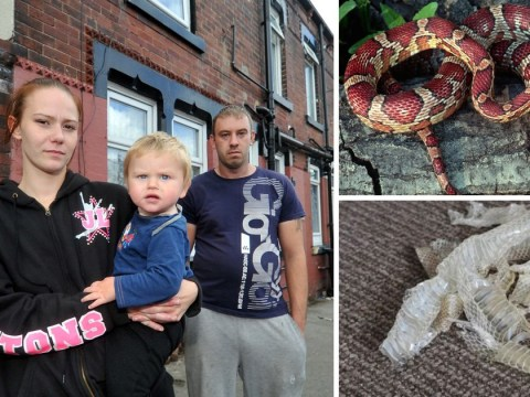 Family terrorised by snakes living under their floorboards