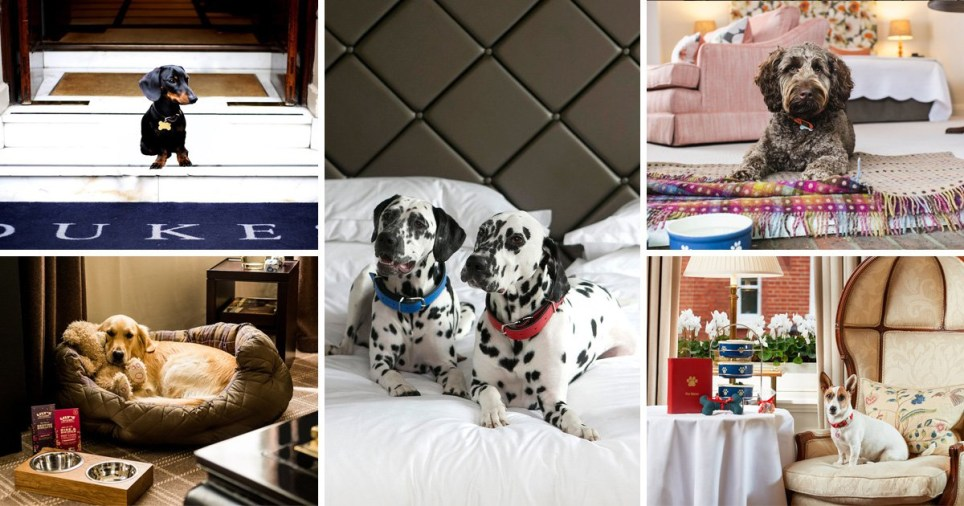 35 hotels around the UK where your dog can stay too   Metro News