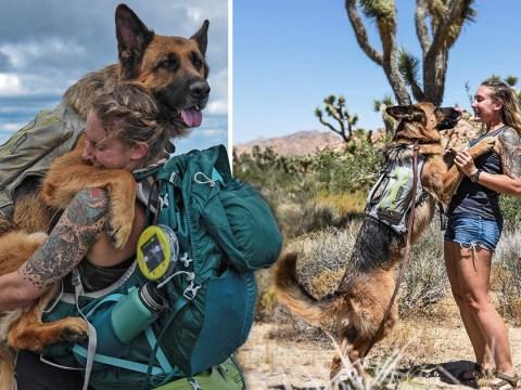Meet Bear: The mountain-climbing, desert-hiking adventure dog