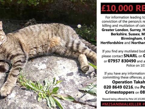 Croydon cat killer linked to seven animal murders this week alone