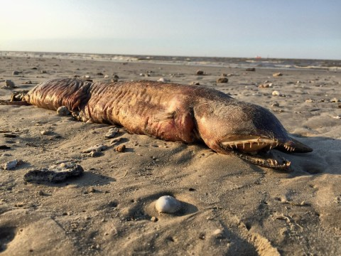 What on earth is this terrifying eyeless sea creature?