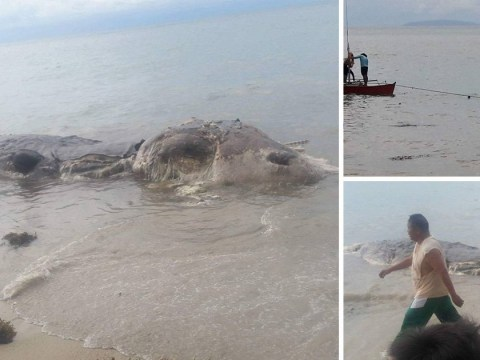 Strange 32ft sea creature washes up on beach