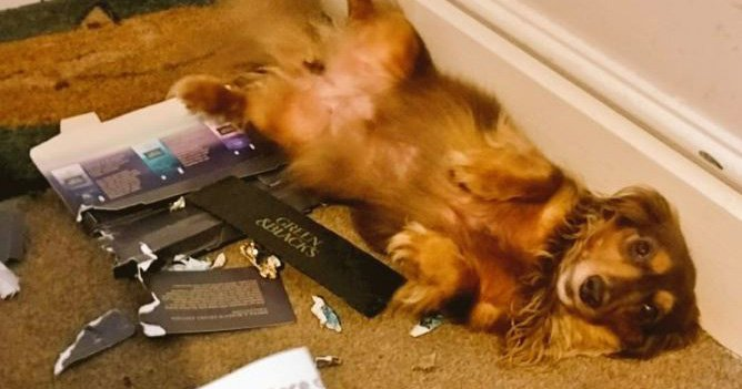 Dogs fall ill after eating chocolate posted through the door by Sainsbury's