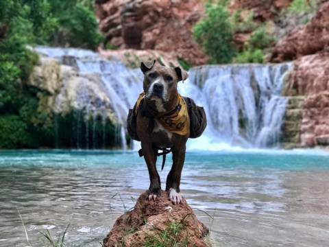 Penni the rescue dog overcame her fear of noise and people by going hiking in the great outdoors