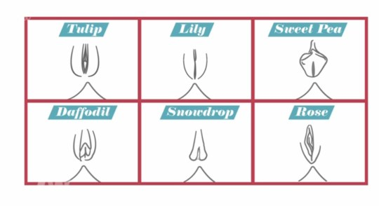 The Show Shared Six Shapes Of Vagina Also Picture Itv