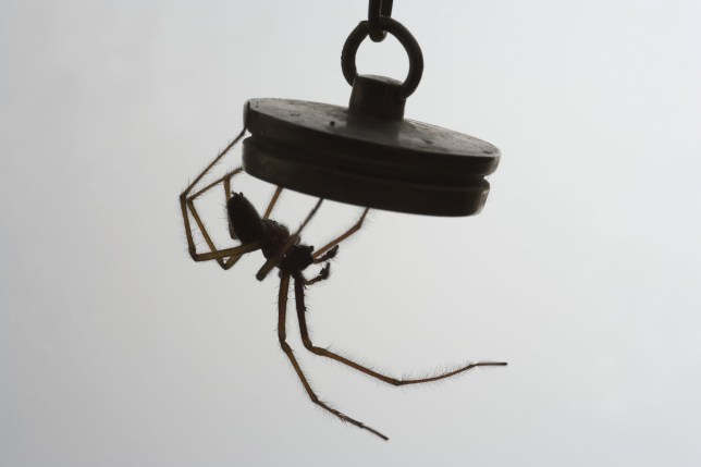 Une araignée accrochée à une prise de bain