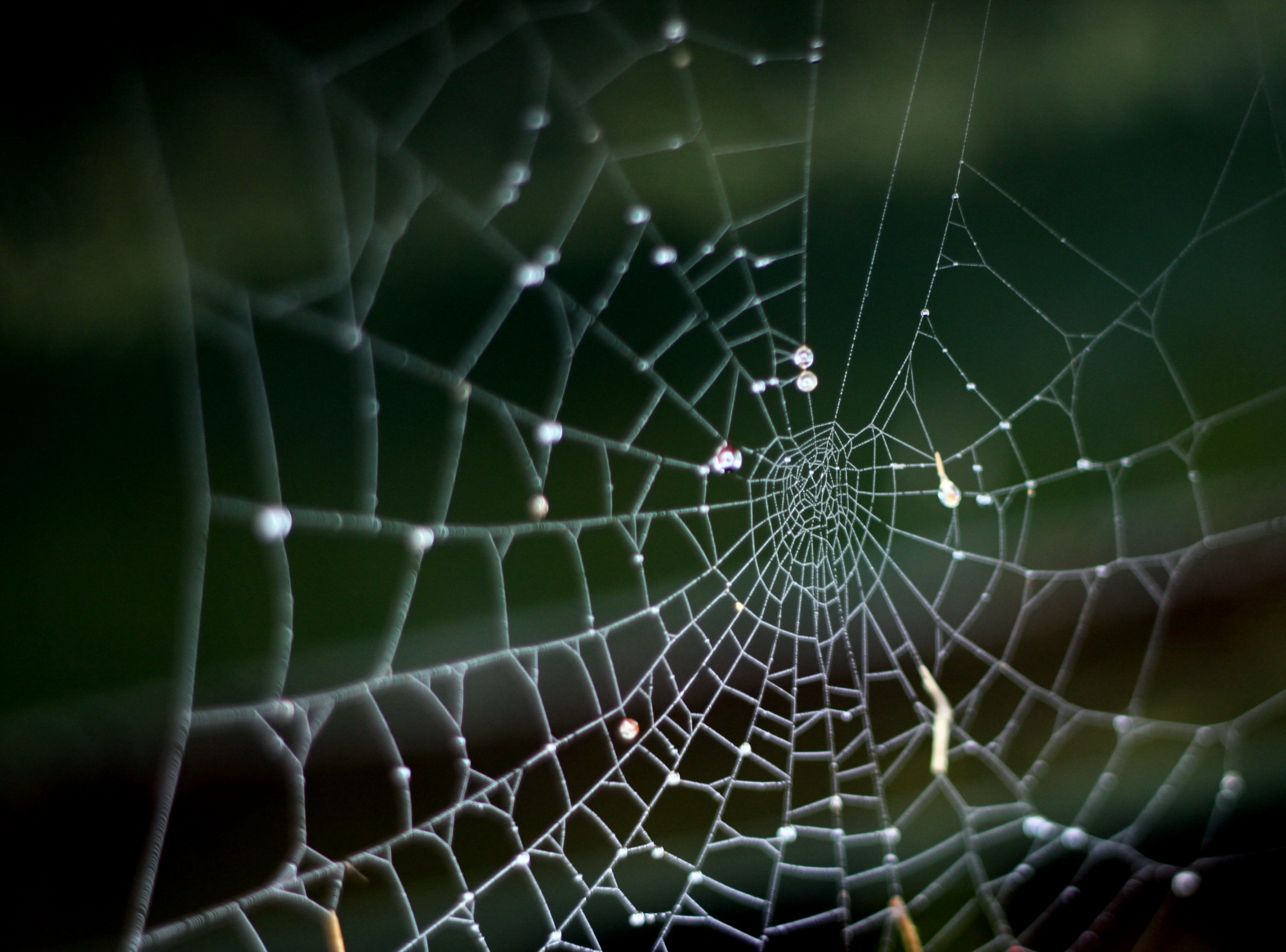 Where do spiders go in the winter and how do they survive?