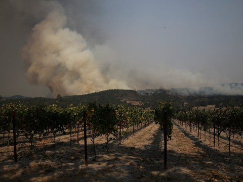 Cabernet Sauvignon will not be impacted by raging Napa Valley wildfires, vintners confirm