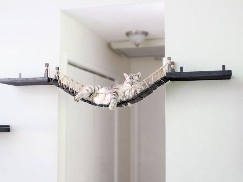 Couple creates an amazing Indiana Jones bridge for their cat