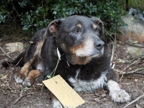 Family had no idea their dog was a hero – until they found a note on his collar