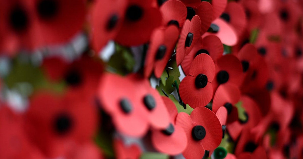 What Is The British Legion And Where Does The Poppy Appeal Money