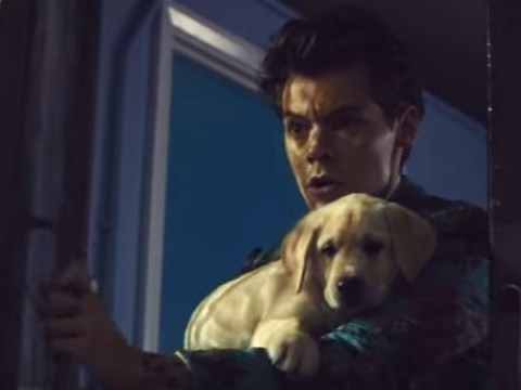 Harry Styles introduces cupcake warfare and puppies in new video for Kiwi