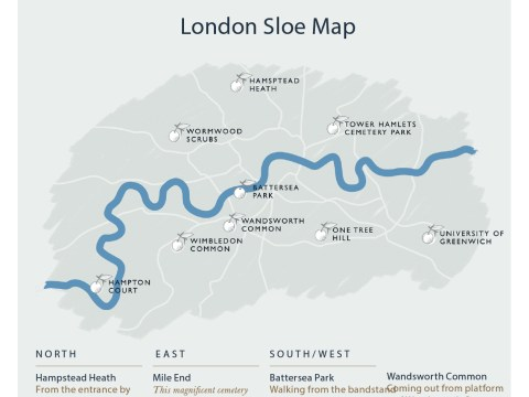 Like making sloe gin? Map of where sloe bushes grow in London