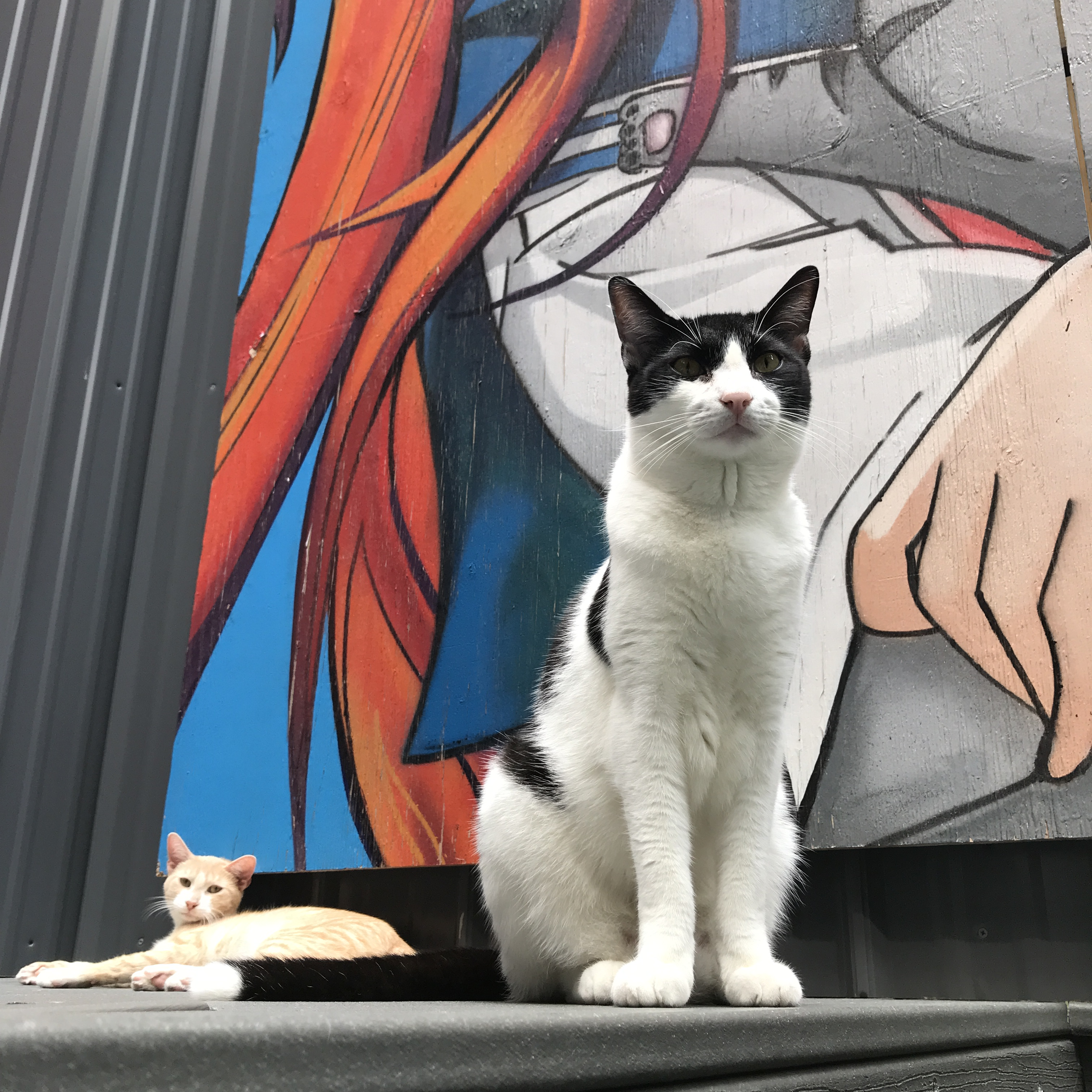 Furrytail Of New York – Which cat cafe should you visit in the Big Apple?