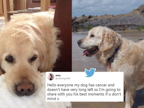 Girl shares heartbreaking tribute to her gorgeous dog, Archie, who recently passed away