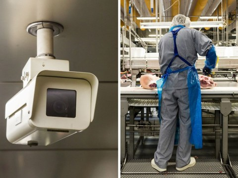 CCTV to become mandatory in all slaughterhouses in England