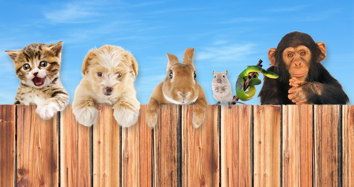 The truth about cats and dogs: what your favourite pet says about you