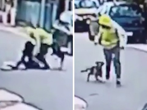 Brave dog stops woman being robbed by thug in the street