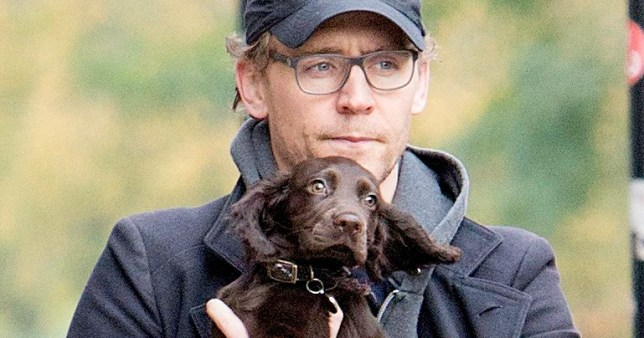 Tom Hiddleston holding a puppy is the best thing you'll see today