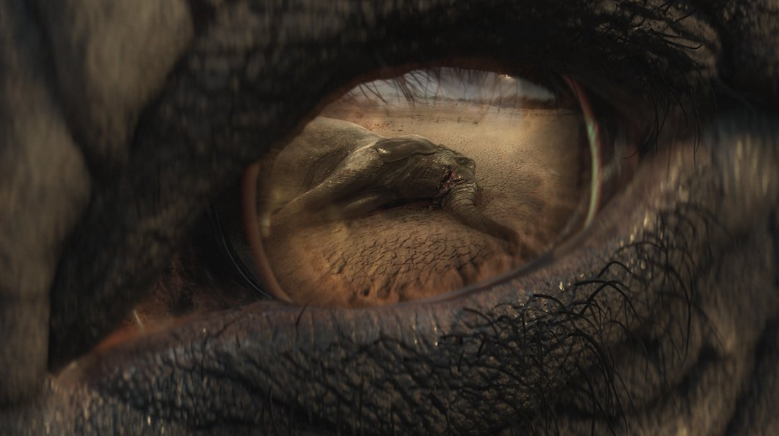 The Christmas advert that really will make you cry: WWF releases harrowing footage of elephant's tears