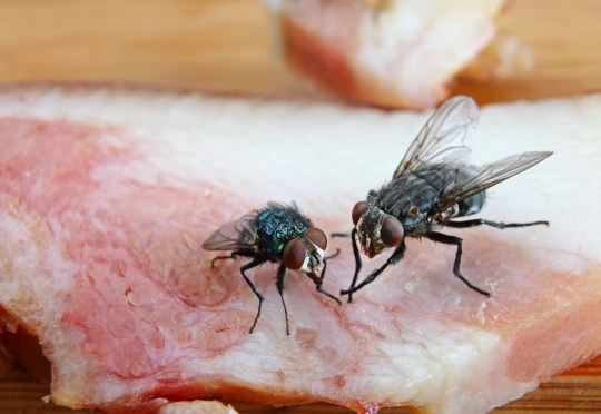 If a fly lands on your food, you are literally eating other people's poo