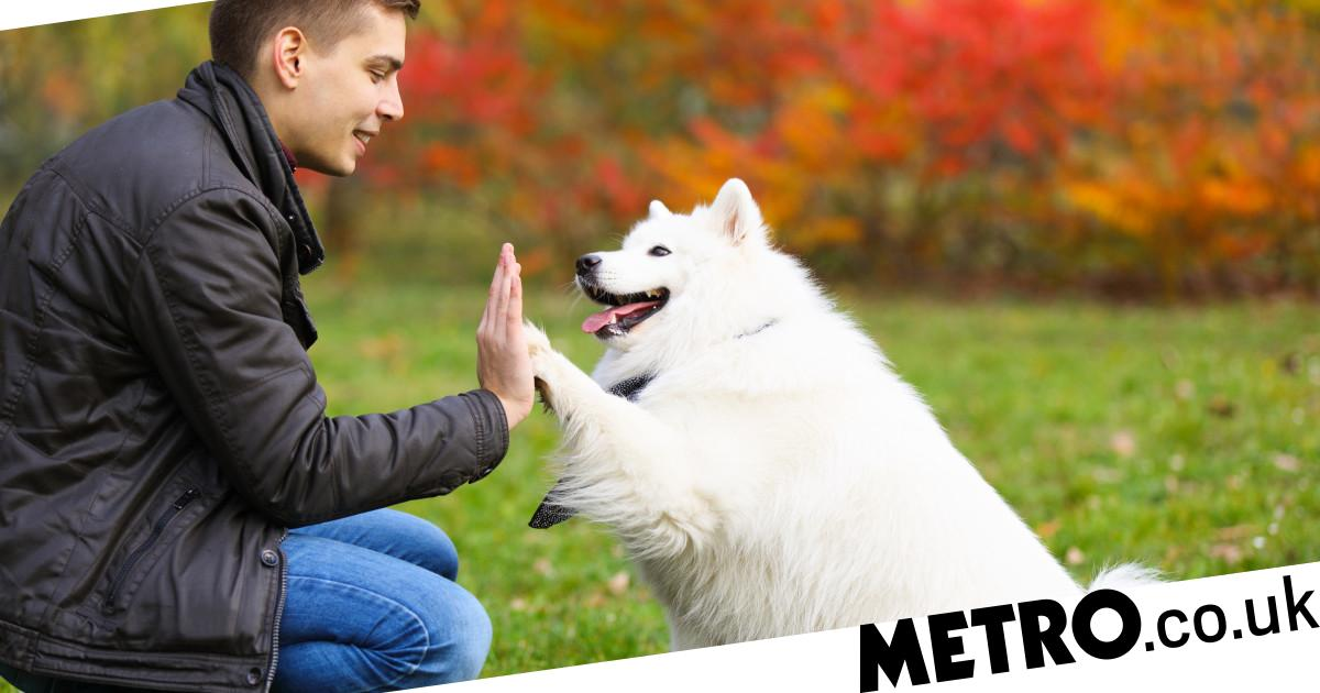 Dogs really do love their owners and new research proves it