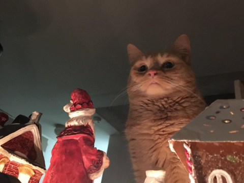 So, this cat wants Santa to die