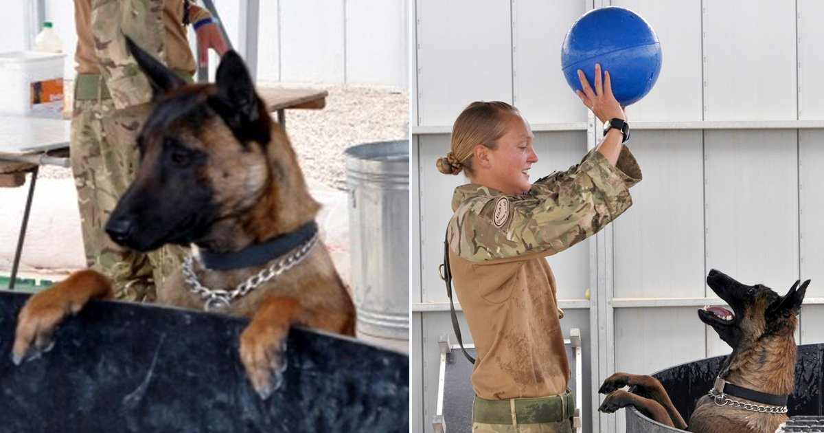 Two hero Army dogs due to be put down 'have been saved'