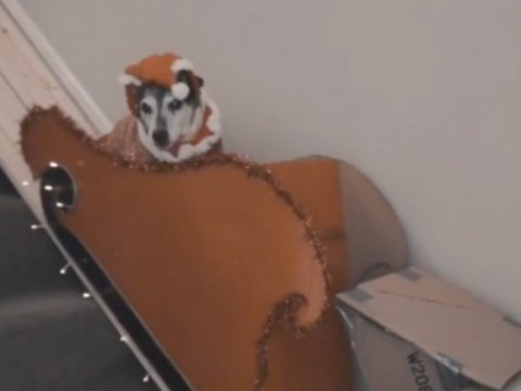 An ageing dog has been given his very own special Santa's sleigh stairlift