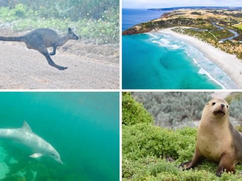 11 reasons why you should visit Australia's Kangaroo Island
