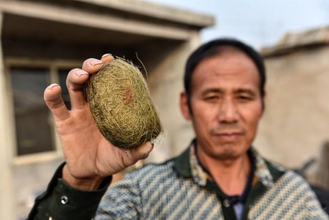 Bo Chunlou and his pig treasure