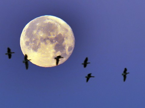 What is a supermoon and when will we see the next one?
