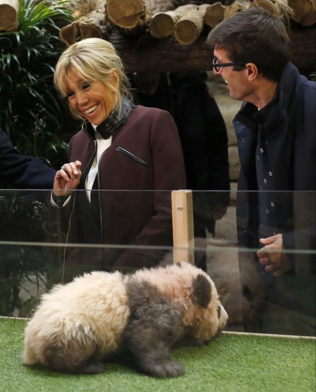 Angry baby panda goes for Brigitte Macron